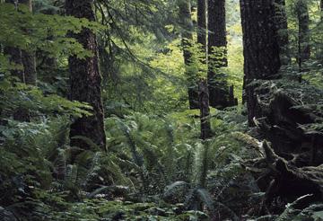 Pacific Northwest Coast Ecoregion scene